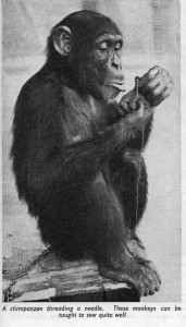 chimp-threading-a-needle-001